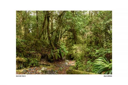 Milford Track – I (Luxe kaart 20x30cm.)